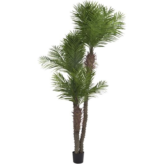 Picture of ARECA PALM h270cm green