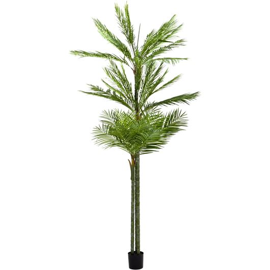Picture of ARECA palm tree h300cm green