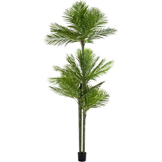 Picture of ARECA palm tree h450m green