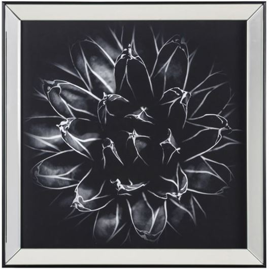 Picture of Framed Print Flower III 67x67 clear