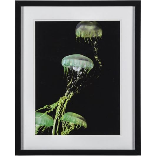 Picture of Framed Print Seajelly II 43x53 black