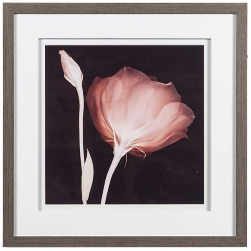 Picture of Framed Print Innocence 45x45 grey
