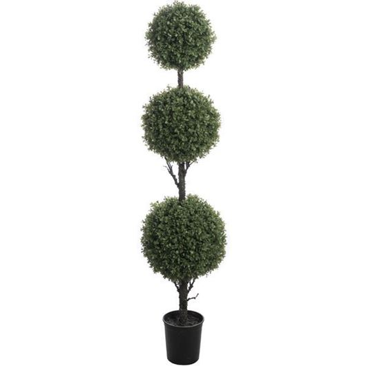 Picture of BOXWOOD tree h160cm green