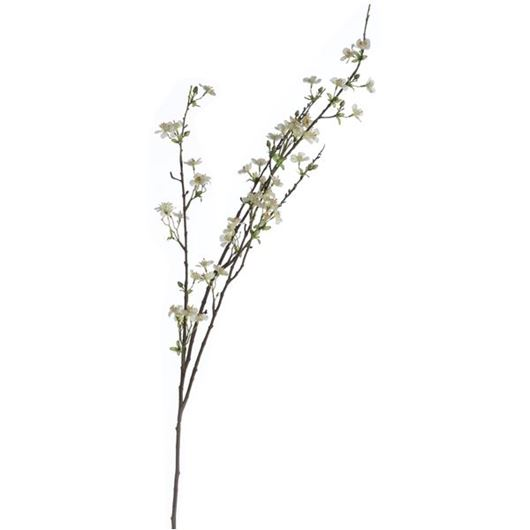 Picture of ANISODENTIA stem h117cm white