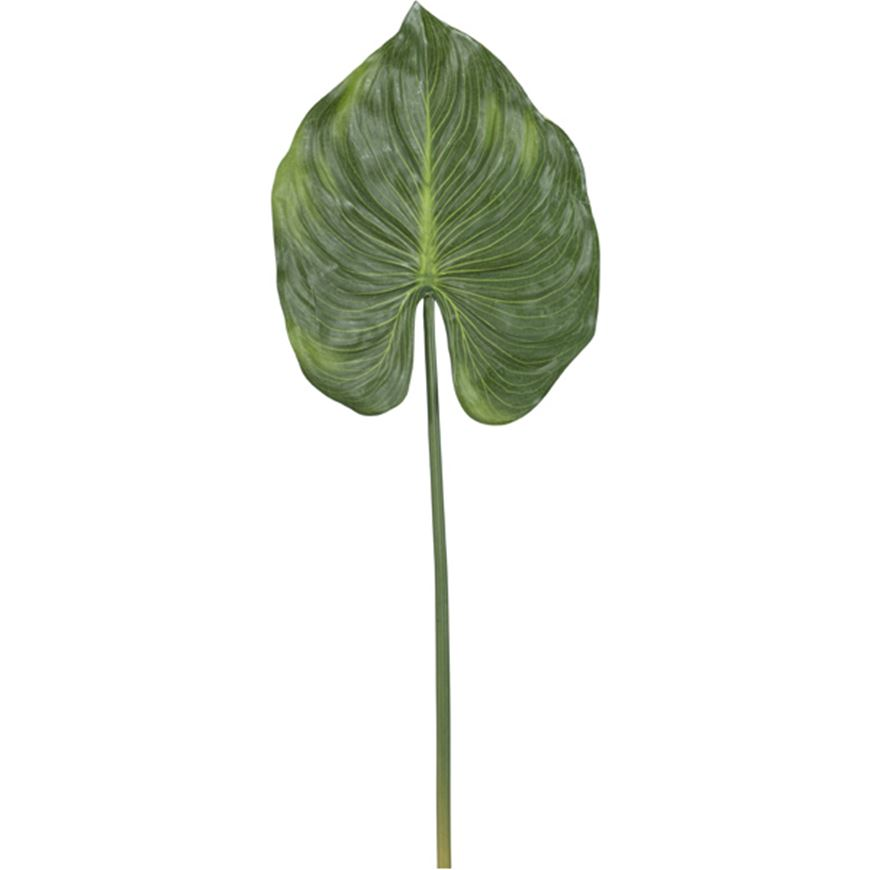 Picture of CANNA leaf h79cm green